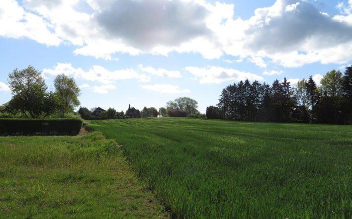 Blick zur Straße Feldweg